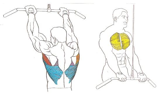 Rutina de ejercicios para dorsal inferior y espalda media | Consejos ...